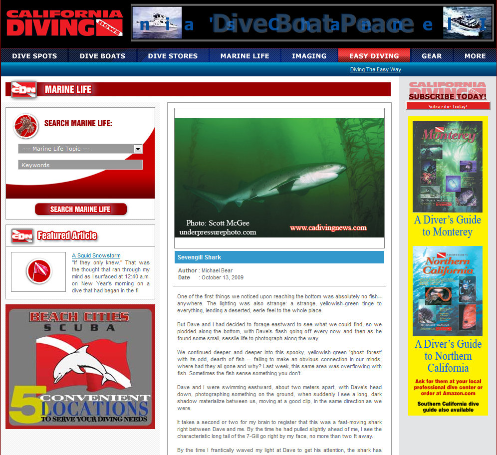 Sevengill shark photo in a 2009 California Diving News article by Michael Bear.