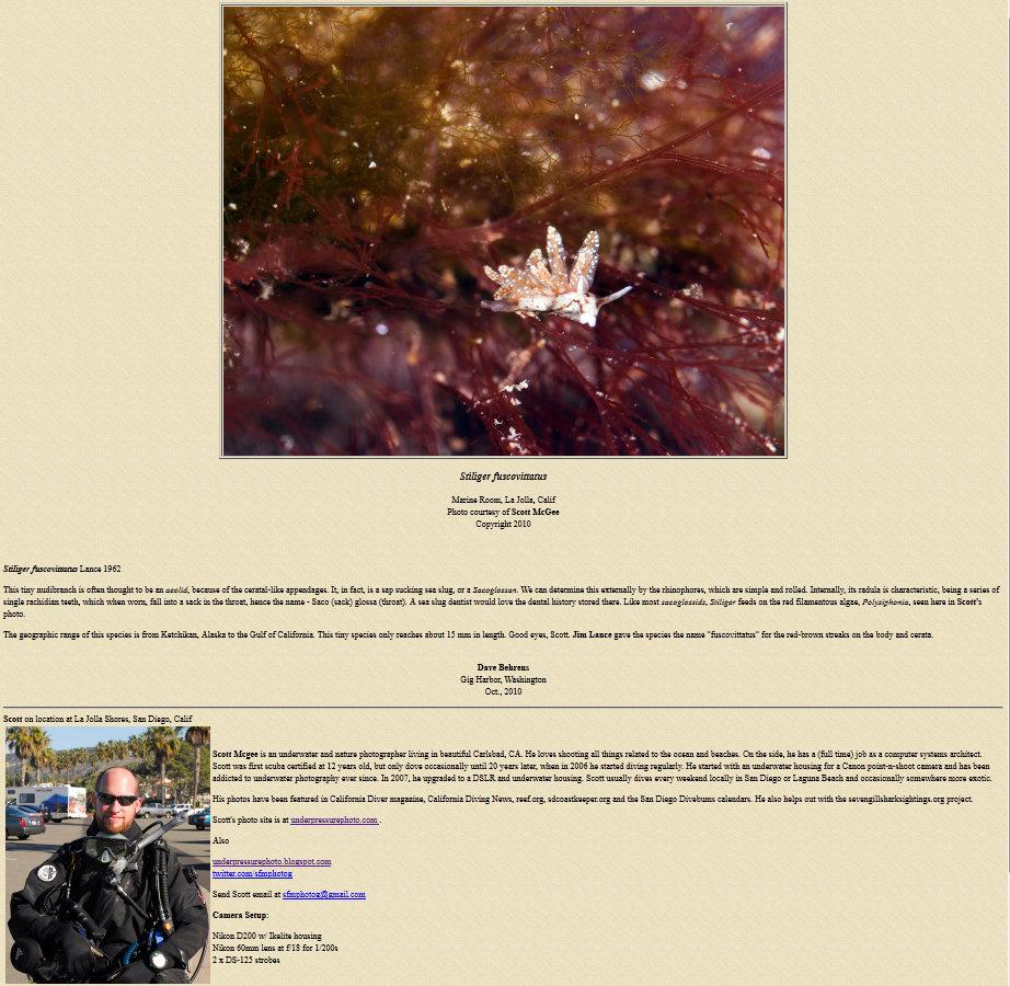 Stiliger fuscovittatus - Opisthobranch of the Week, The Slug Site, October 25, 2010