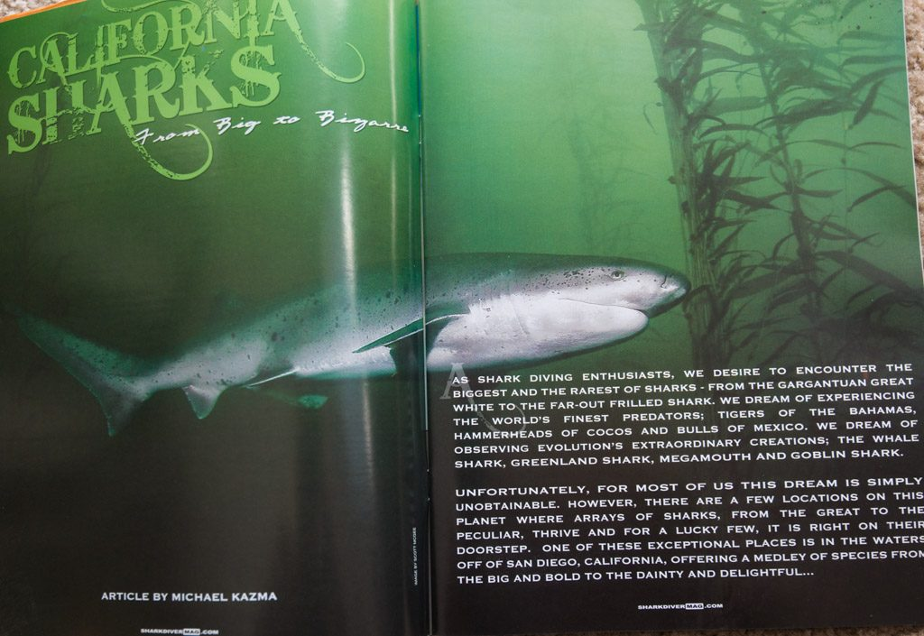 Full spread image of a sevengill shark in the Pt Loma kelp forests in Shark Diver Magazine.