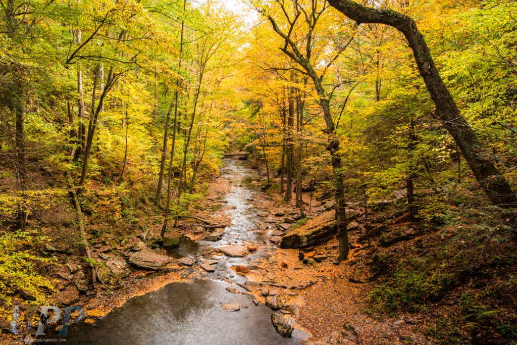 View looking over the Sheldon Reynolds Falls, down Kitchen Creek, Ricketts Glen, PA. Even though you can't see the falls in this photo, it's one of my favorites from Ricketts Glen. It shows the canopy of fall colors over Kitchen Creek and the carpet of fallen leaves that color the ground. If you look closely, you can see a person sitting on the banks of the river. Her boyfriend/husband was hiking barefoot and had climbed up to the base of the falls, just underneath me with a big grin on his face.