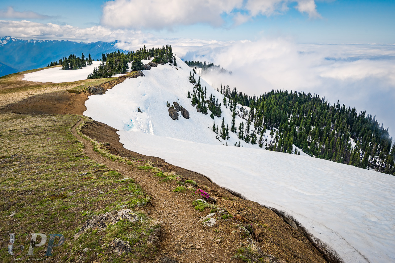 Hurricane Hill, Olympic National Park, WA