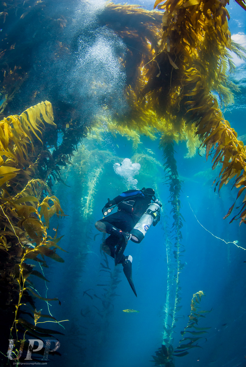 Surrounded by Kelp