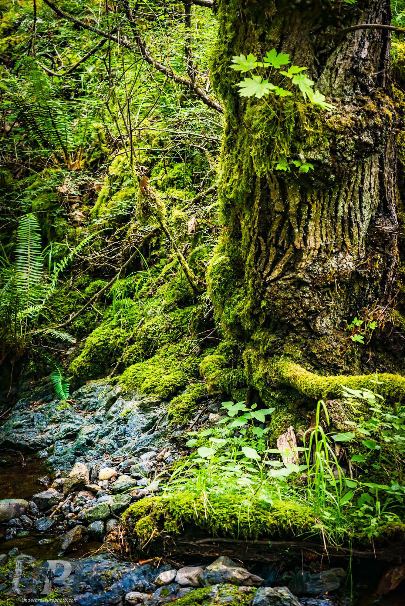 Rainforest Labrynth