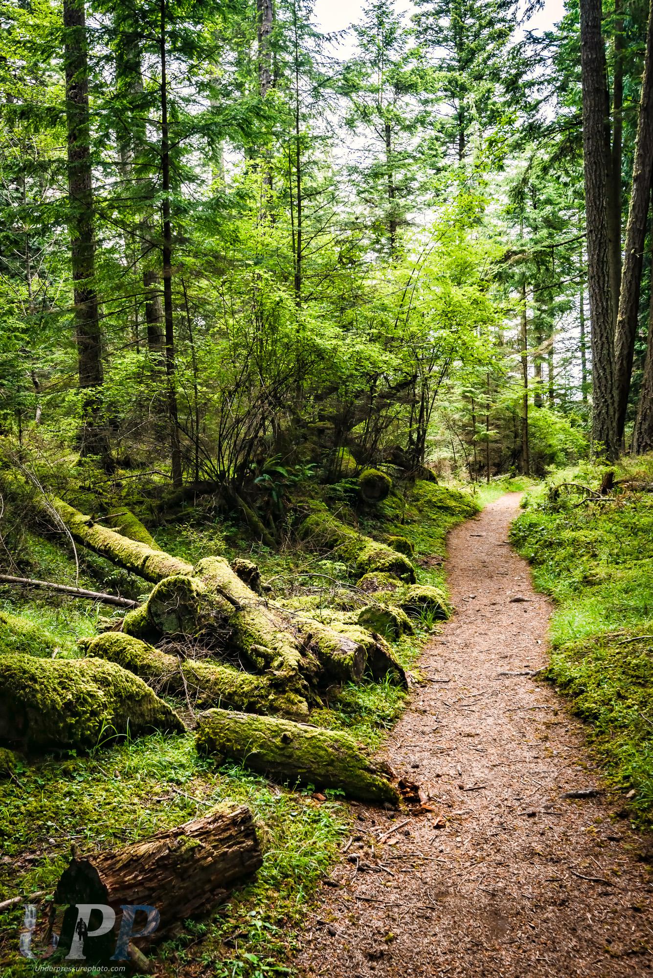 Logs Be Trippin' Lane