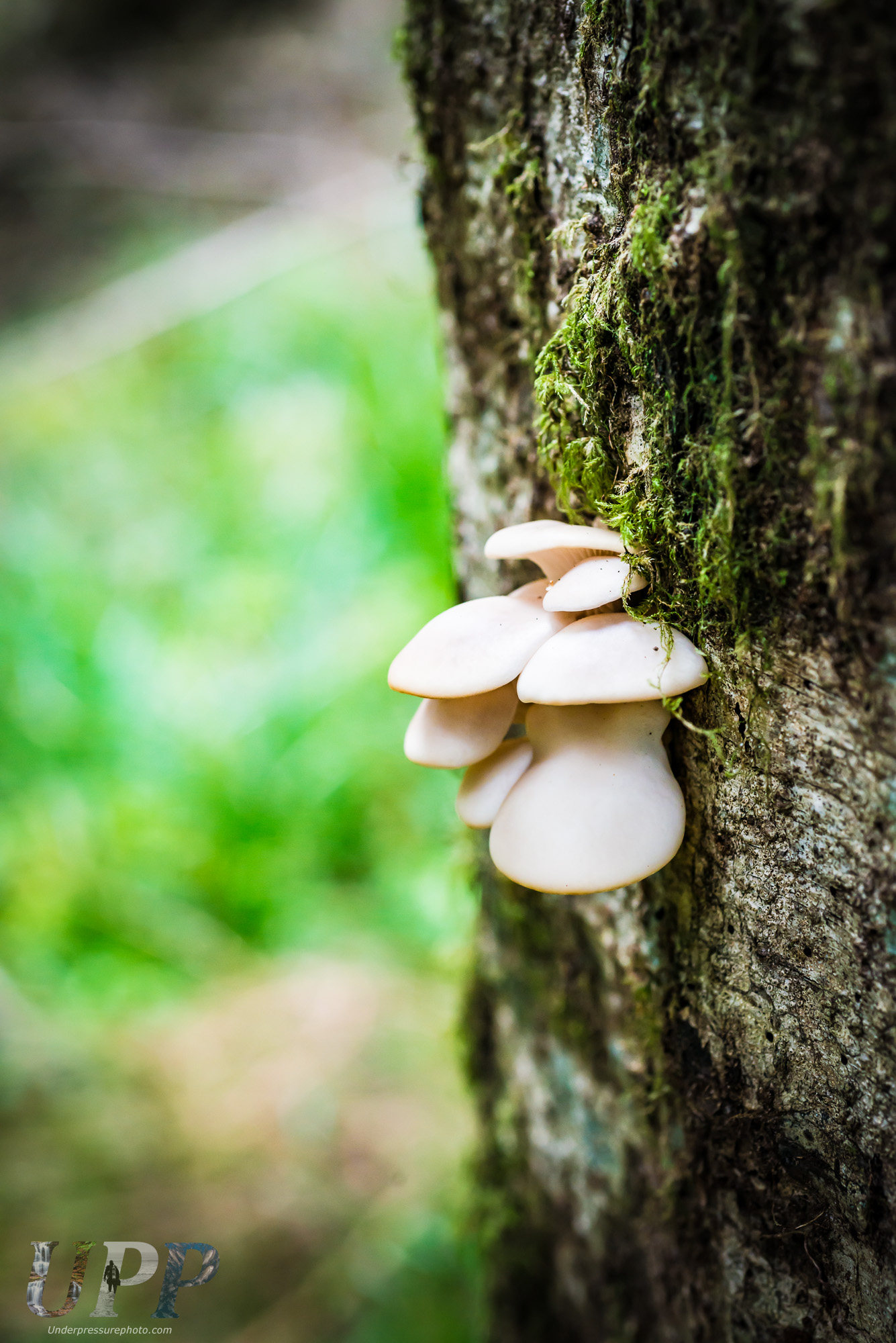 Forest Fungus